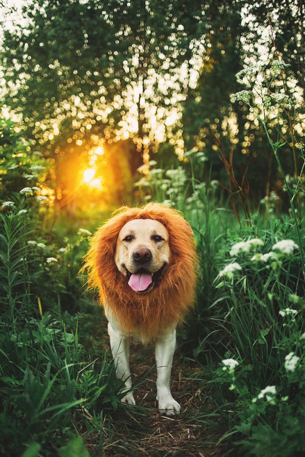 O Cachorro e o Leão